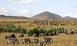 Masai_Mara_National copy