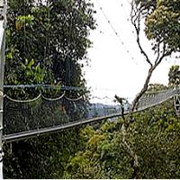 canopy walk Nyugwe