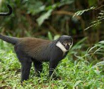 l host monkey