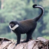 lhost monkey