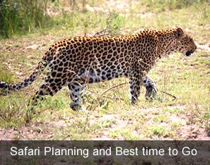 safari planning