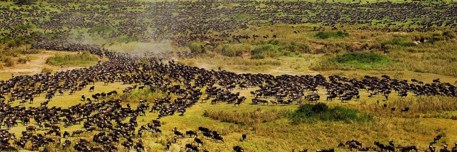 wildebeest tanzania safaris